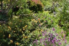 Garten 012