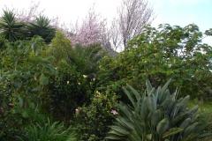 Garten 023